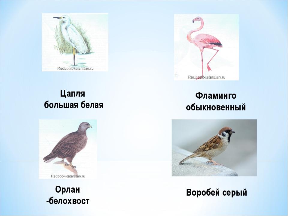 Цапля большая белая Фламинго обыкновенный Орлан -белохвост Воробей серый