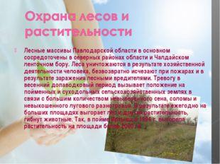 Лесные массивы Павлодарской области в основном сосредоточены в северных район