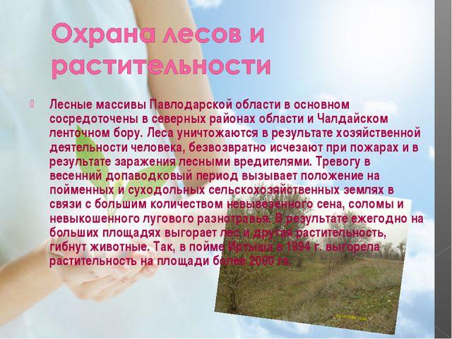 Лесные массивы Павлодарской области в основном сосредоточены в северных район...