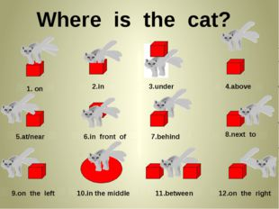 Where is the cat? 1. on 2.in 3.under 4.above 5.at/near 6.in front of 7.behin