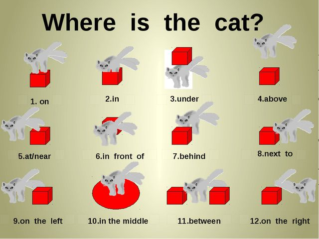 Where is the cat? 1. on 2.in 3.under 4.above 5.at/near 6.in front of 7.behin...