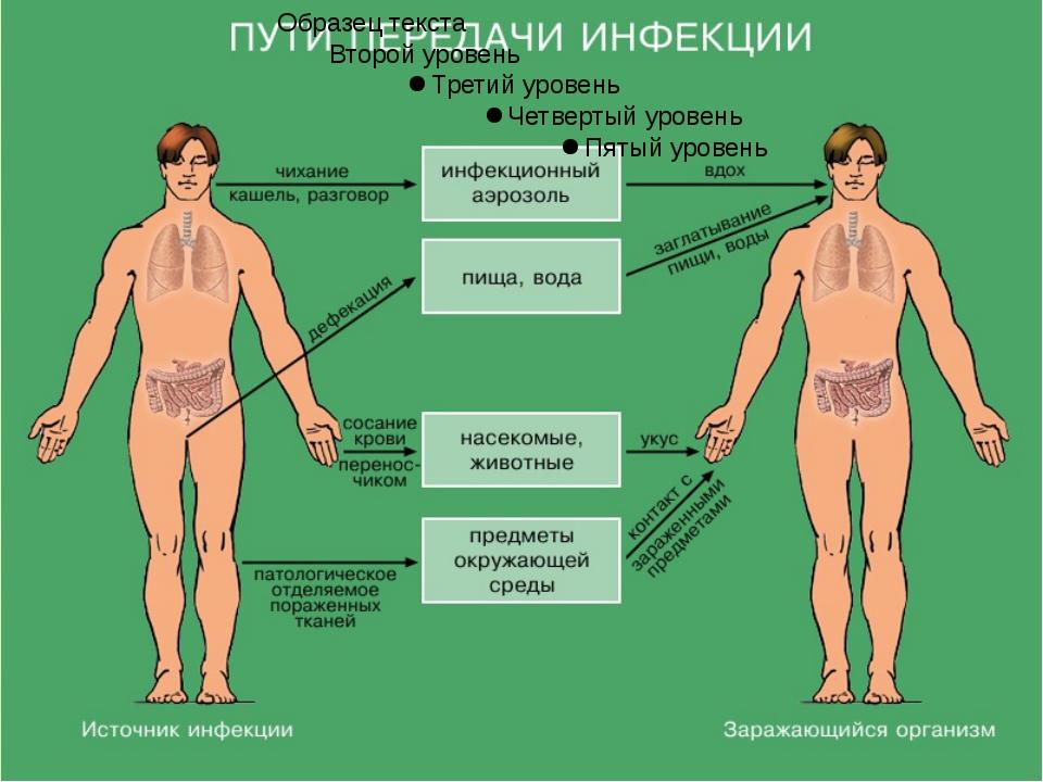 3. Период основных проявлений болезни По мере развития инфекционного заболева...