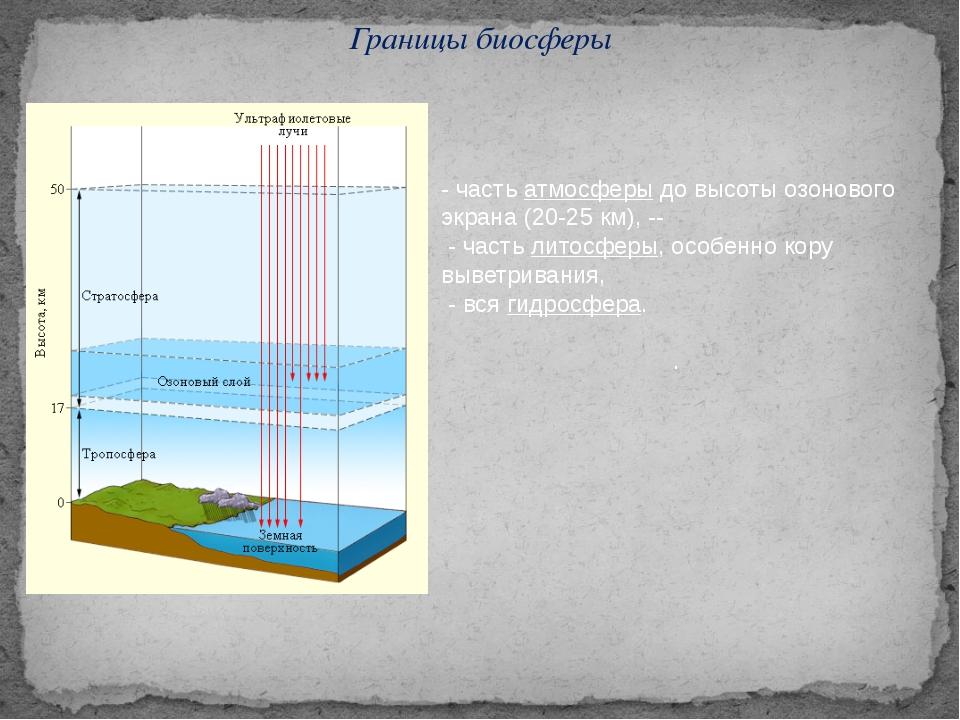 Границы биосферы - часть атмосферы до высоты озонового экрана (20-25 км), --...