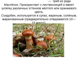 Маслёнок ли́ственничный— гриб из рода Маслёнок. Произрастает с лиственнице