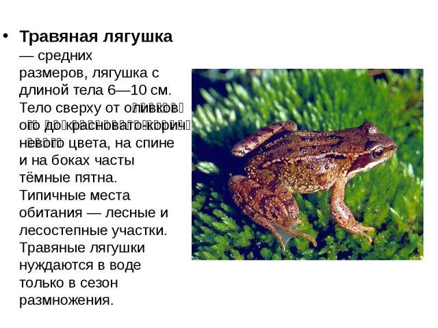 Травяная лягушка — средних размеров,лягушка с длиной тела 6—10см. Тело свер...