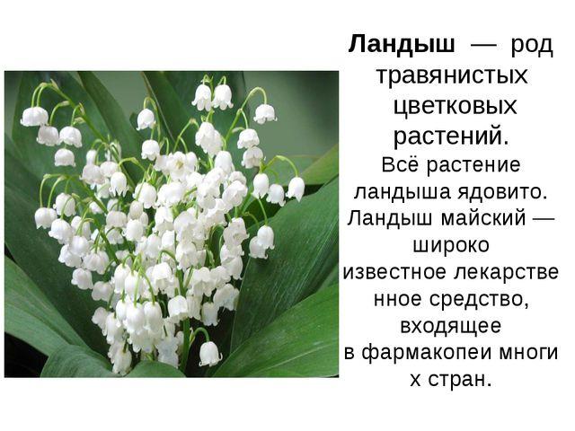 Ландыш— род травянистых цветковых растений. Всё растение ландыша ядовито....
