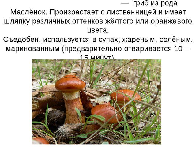 Маслёнок ли́ственничный— гриб из рода Маслёнок. Произрастает с лиственнице...