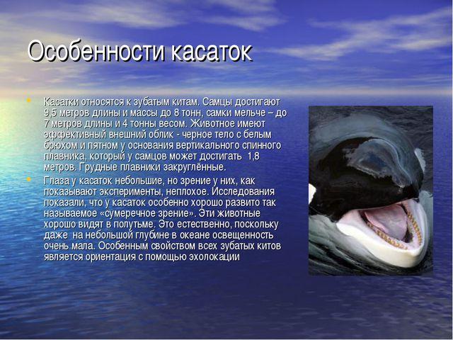 Особенности касаток Касатки относятся к зубатым китам. Самцы достигают 9,5 ме...