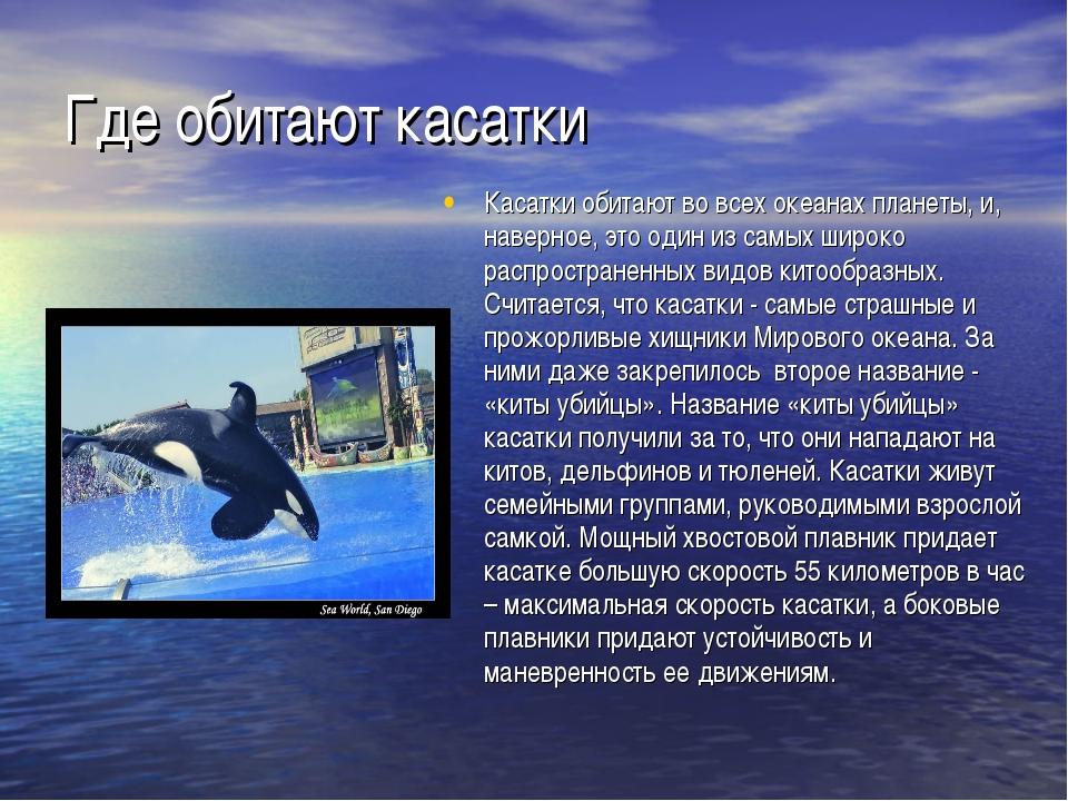 Где обитают касатки Касатки обитают во всех океанах планеты, и, наверное, это...