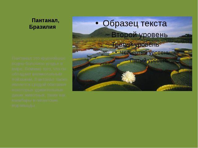 Пантанал, Бразилия Пантанал это крупнейшее водно-болотное угодье в мире. Пом...
