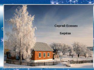 Сергей Есенин Берёза