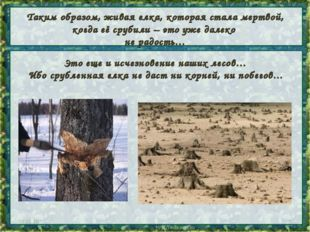 Таким образом, живая елка, которая стала мертвой, когда её срубили – это уже