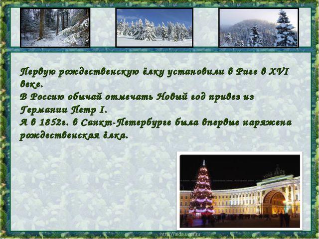 Первую рождественскую ёлку установили вРиге в XVI веке. В Россию обычай от...