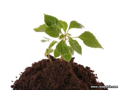 Песок, гравий, ПГС, грунт, щебень (Сургут): +7 (902)690-09-97. . Купить с доставкой в Сургуте. . Цена доступная.