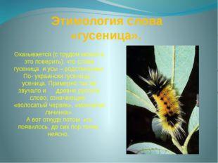 Этимология слова «гусеница». Оказывается (с трудом можно в это поверить), чт