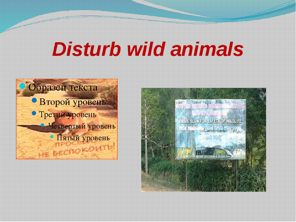 Disturb wild animals