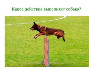 Какое действие выполняет собака?