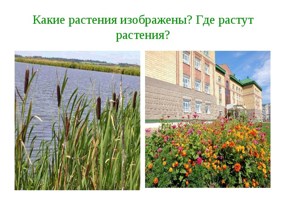 Какие растения изображены? Где растут растения?