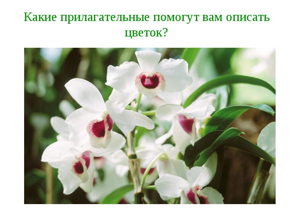 Какие прилагательные помогут вам описать цветок?