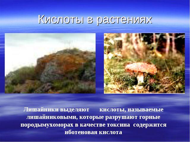 Кислоты в растениях Лишайники выделяют кислоты, называемые лишайниковыми, ко...