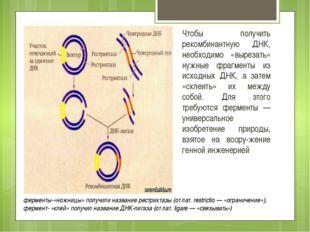 Список использованных источников: http://lomonosov-fund.ru/enc/ru/encyclopedi