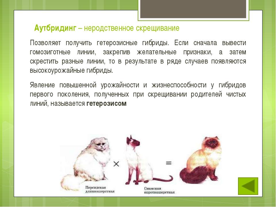 У животных чаще всего межвидовые гибриды стерильны, у них нарушается мейоз, ч...