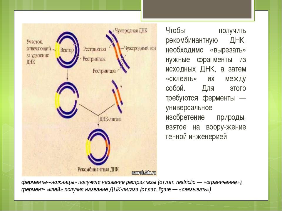Список использованных источников: http://lomonosov-fund.ru/enc/ru/encyclopedi...