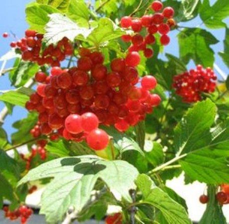 http://plodovka.ru/d/300286/d/image_58.jpg
