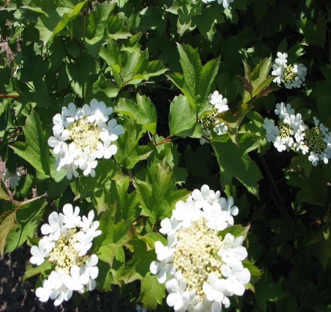 http://garden-house.kiev.ua/uploads/product/1393_2248538149.jpg