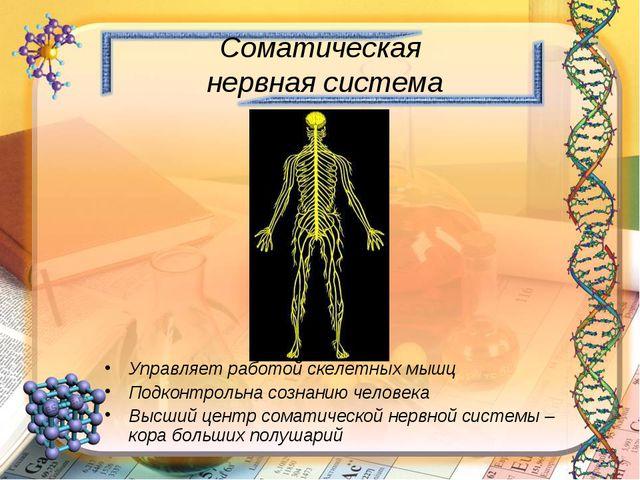 Соматическая нервная система Управляет работой скелетных мышц Подконтрольна с...