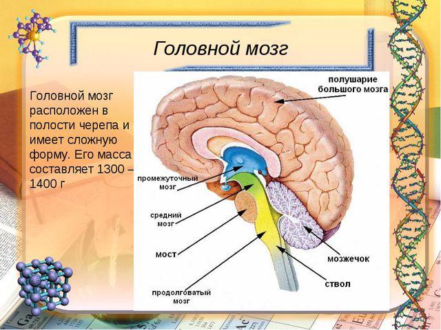 Головной мозг Головной мозг расположен в полости черепа и имеет сложную форму...