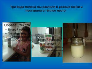 Три вида молока мы разлили в разные банки и поставили в тёплое место.