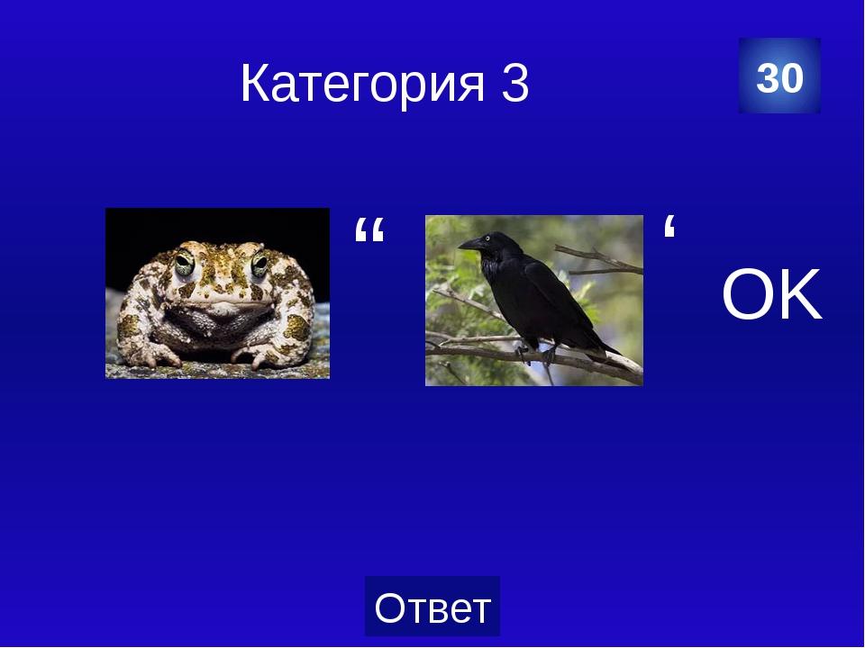 Категория 3 грач 40 Категория Ваш ответ