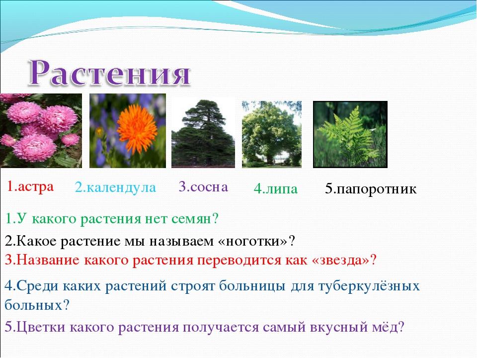 1.астра 2.календула 3.сосна 4.липа 5.папоротник 1.У какого растения нет семян...