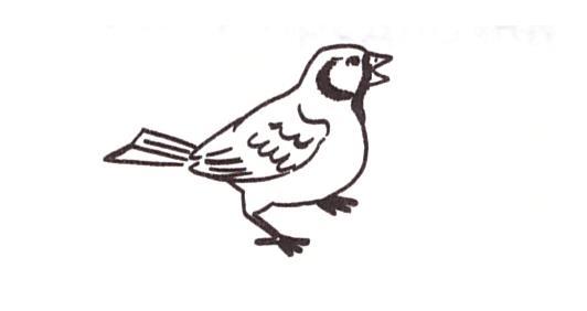 C:\Users\учитель\Desktop\птица.jpeg