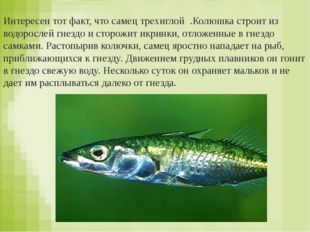 Икра – малек – рыба Яйцо – птенец – птица Яйцо – личинка – куколка – бабочка