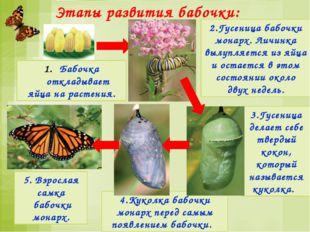Этапы развития птиц: В гнёзда птицы откладывают яйца и насиживают их - согрев