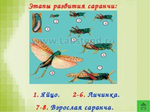 Этапы развития саранчи: 1. Яйцо. 2-6. Личинка. 7-8. Взрослая саранча.