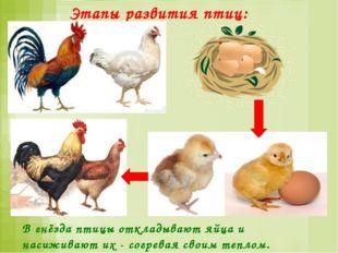 Млекопитающие Млекопитающие рождают живых детёнышей. Мать выкармливает их мол
