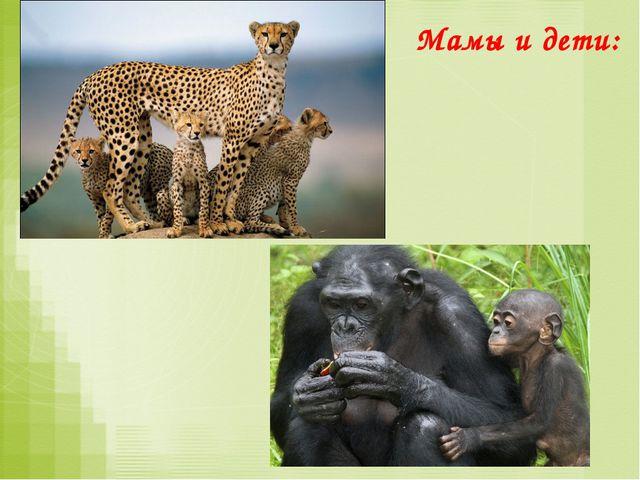 Группы животных Размножение Развитие Насекомые откладывают яйца либо: яйцо –...