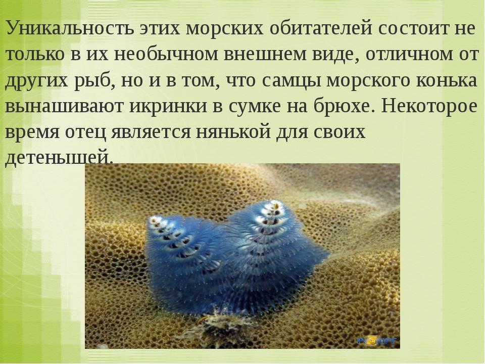 Кто выкармливает детёнышей молоком? а) птицы и ) звери б)рыбы 2.Какое слово п...