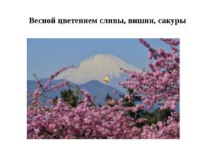 Весной цветением сливы, вишни, сакуры