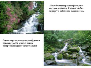 Леса богаты и разнообразны по составу деревьев. Японцы любят природу и заботл