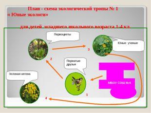 1 Пернатые друзья Первоцветы Зеленая аптека Юные ученые 2 3 4 1 План - схема