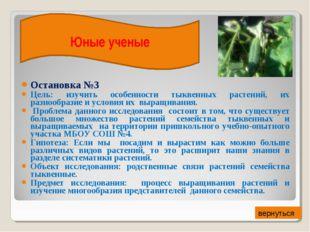 Остановка №3 Цель: изучить особенности тыквенных растений, их разнообразие и