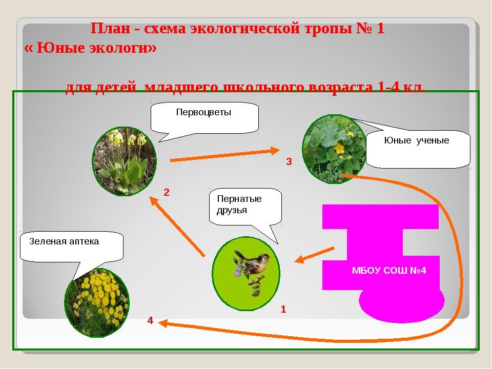 1 Пернатые друзья Первоцветы Зеленая аптека Юные ученые 2 3 4 1 План - схема...
