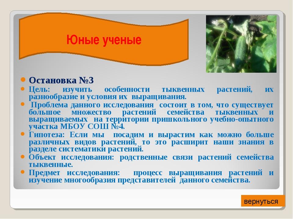 Остановка №3 Цель: изучить особенности тыквенных растений, их разнообразие и...