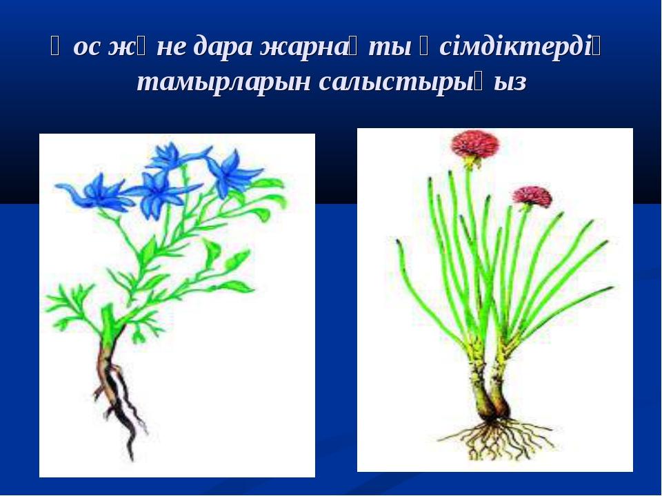 Қос және дара жарнақты өсімдіктердің тамырларын салыстырыңыз