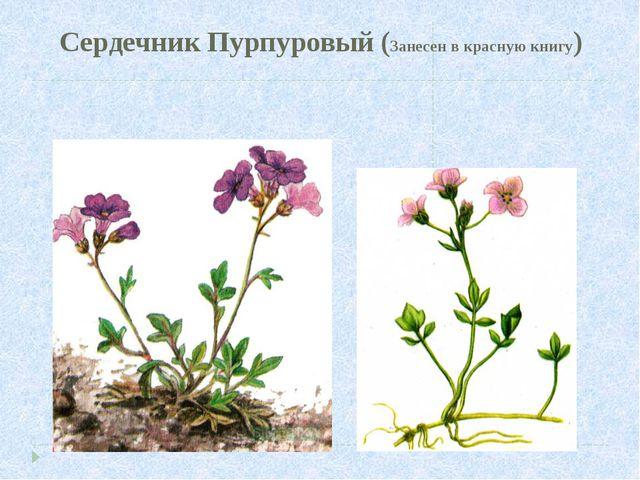 Сердечник Пурпуровый (Занесен в красную книгу)