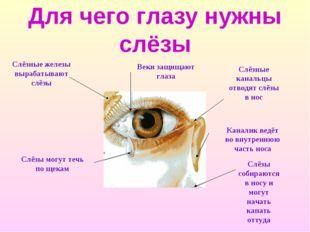 Для чего глазу нужны слёзы Слёзные железы вырабатывают слёзы Слёзы могут течь
